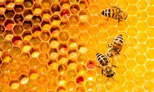 تفاوت عسل اصل و تقلبی